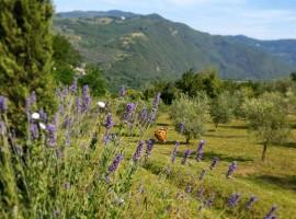 Colline e ulivi a La Fontaccia, agriturismo biologico tra le colline di Firenze