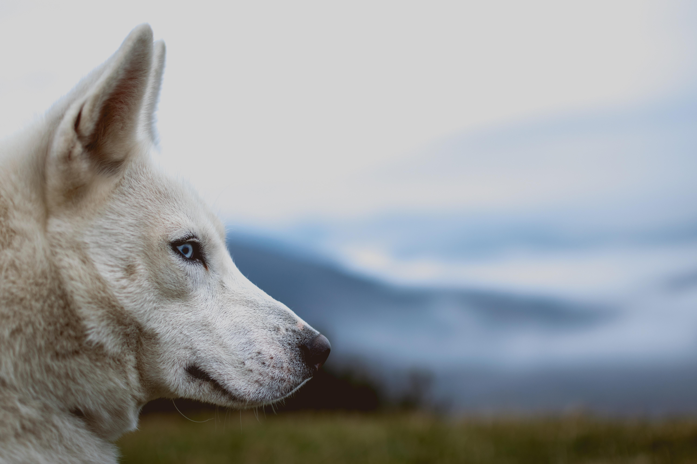 Husky trekking in Valdidentro