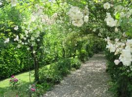 Viale di rose bianche a Cà delle Rose, Fossalta di Portogruaro