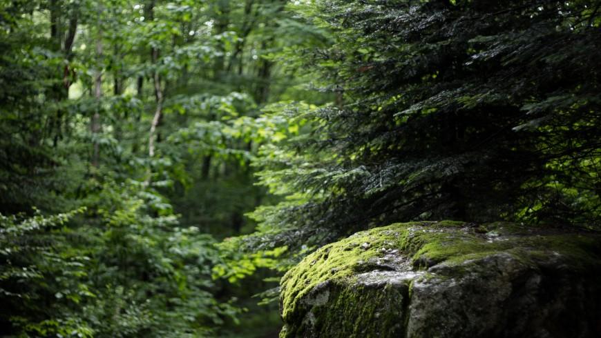 Cervello Verde Natura