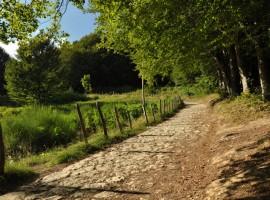 Savio Bike Romagna