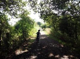 tunnel di verde, in bici nel Wiltshire