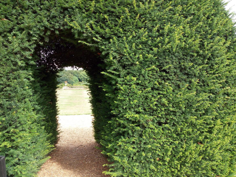 Passaggio segreto nel verde