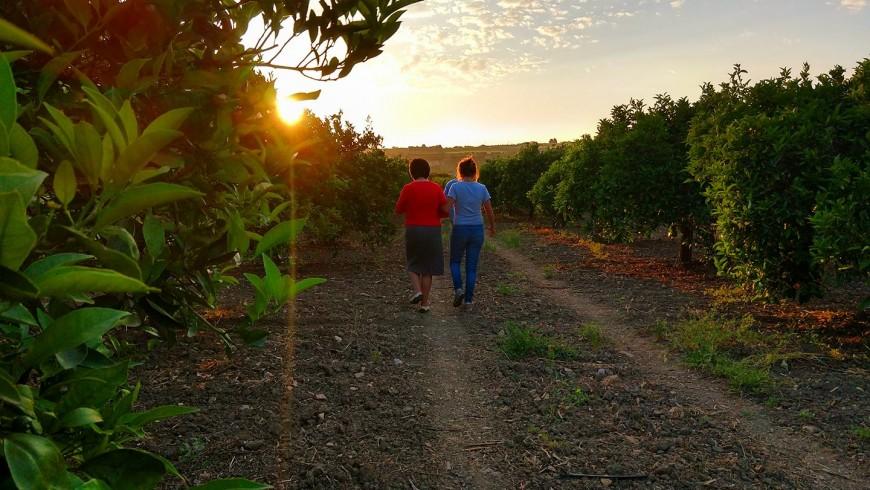 agrumeto biologico nella campagna di Sciacca, Sicilia
