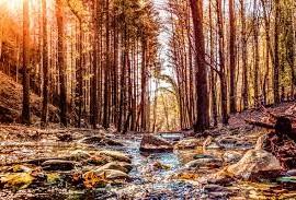 Savio Foresta Romagna