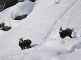 Fauna Neve Muzio