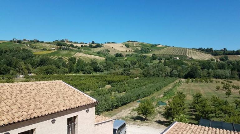 Un weekend tra le vigne nel cuore delle Marche