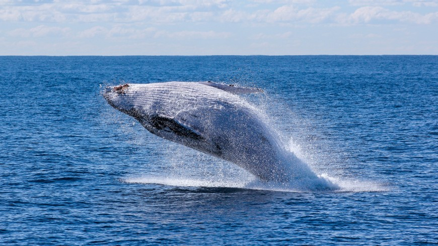 Ammirare le balene in Norvegia