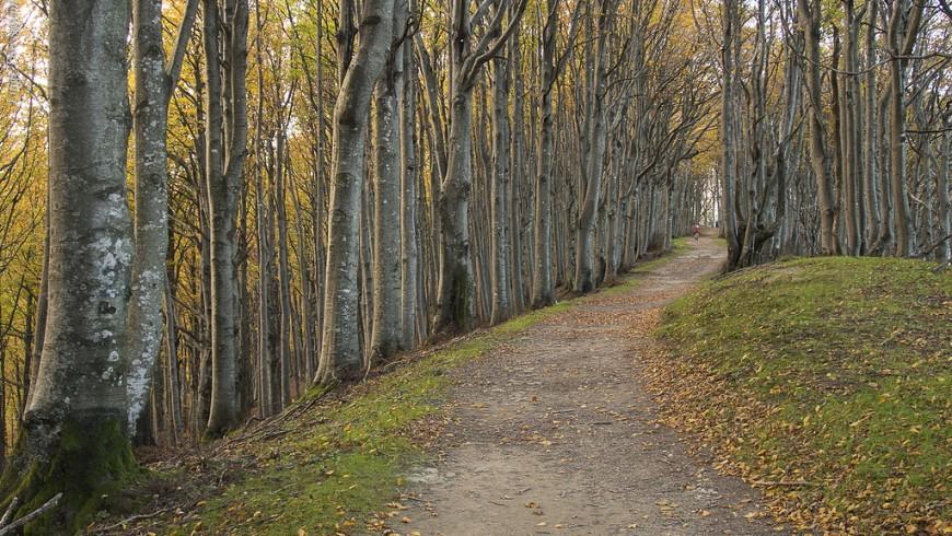 Il foliage nelle Foreste Casentinesi