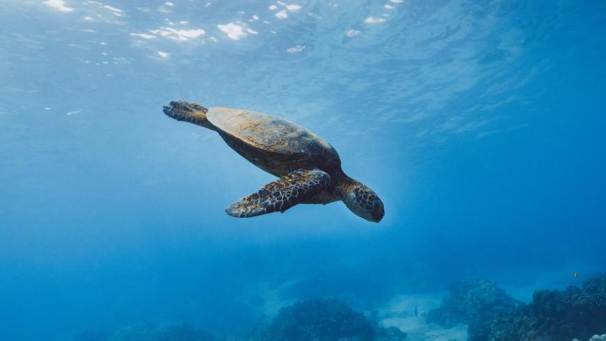 Le tartarughe Caretta Caretta a Lampedusa