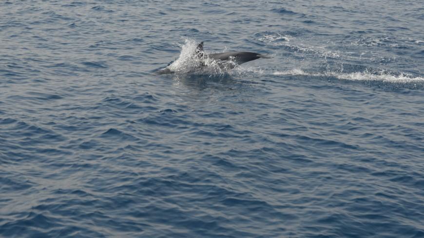 Nel mare di Genova seguendo i delfini