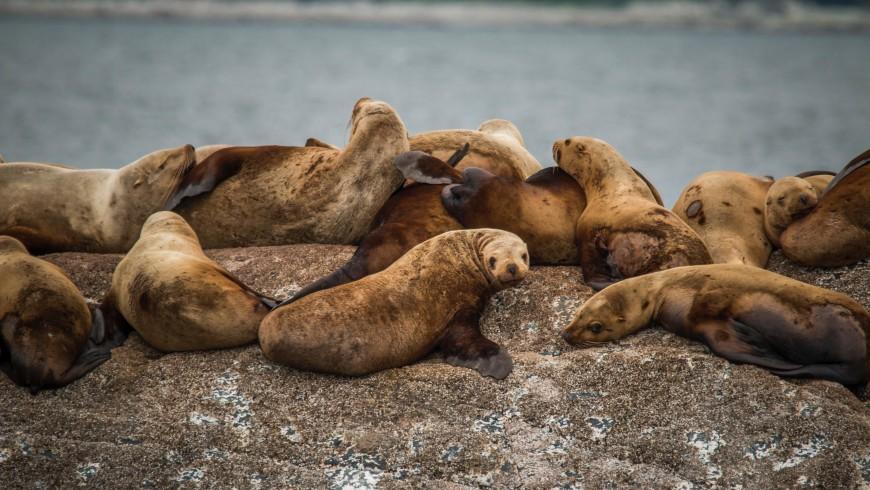 I leoni di mare in California