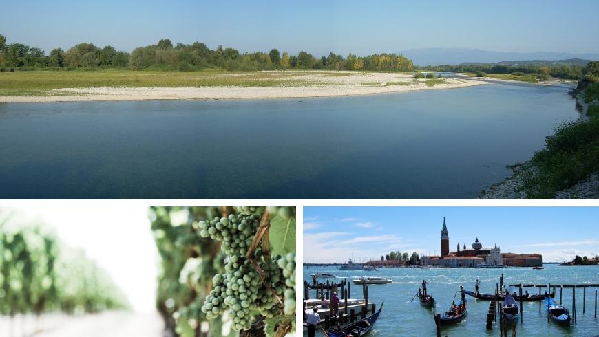 Fiume Piave, itinerario tra i vigneti, Venezia, esperienze vicino all'agriturismo Gazza Ladra
