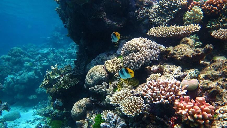 La grande barriera corallina in Australia