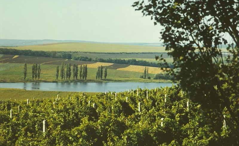 Vigneti - turismo del vino