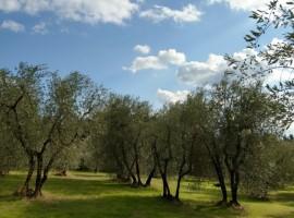 agriturismo la fontaccia, eco-sostenibilità, vivere green
