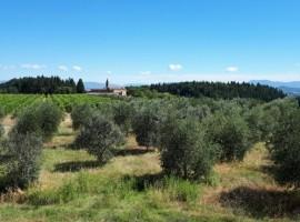 Un weekend tra le vigne in Toscana