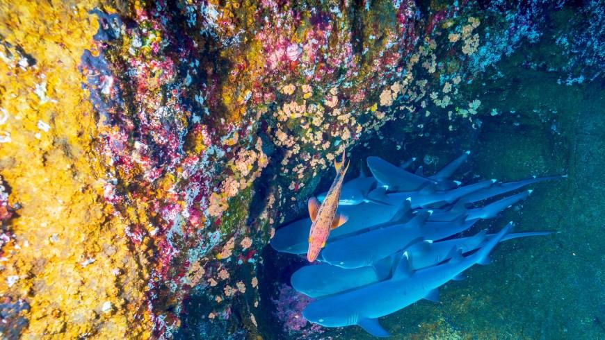 Immersioni subacquee in Messico