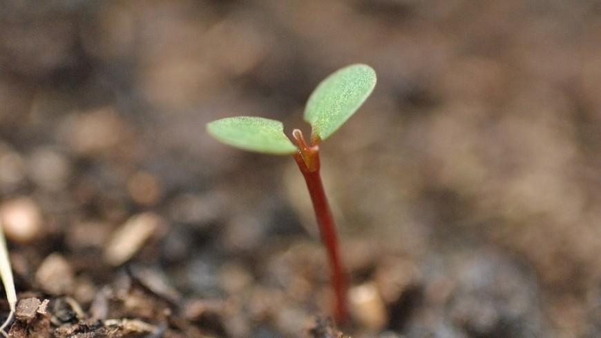 piantare un albero è una delle abitudini green che possiamo adottare per salvare il pianeta