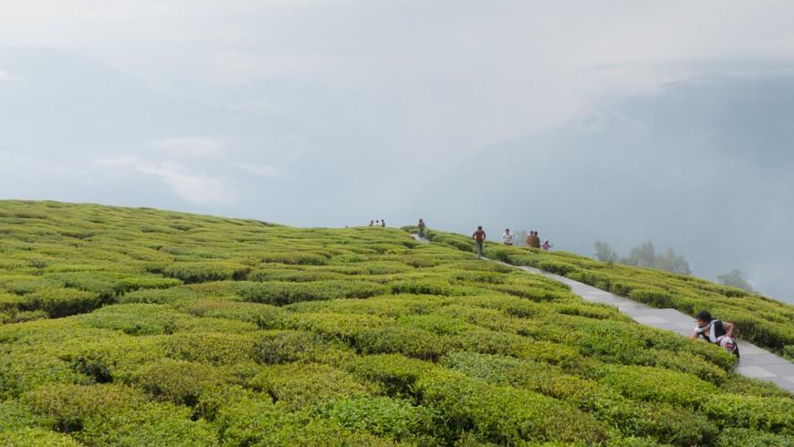 Sikkim, agroecologia e sostenibilit