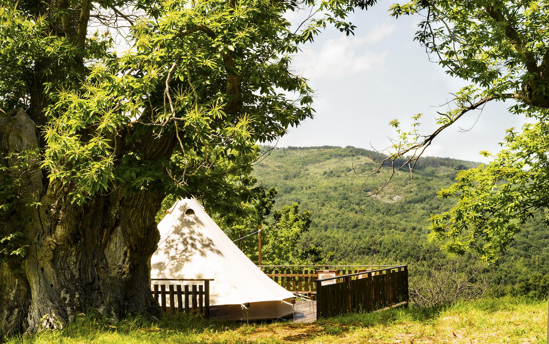 Tenda Chestnut