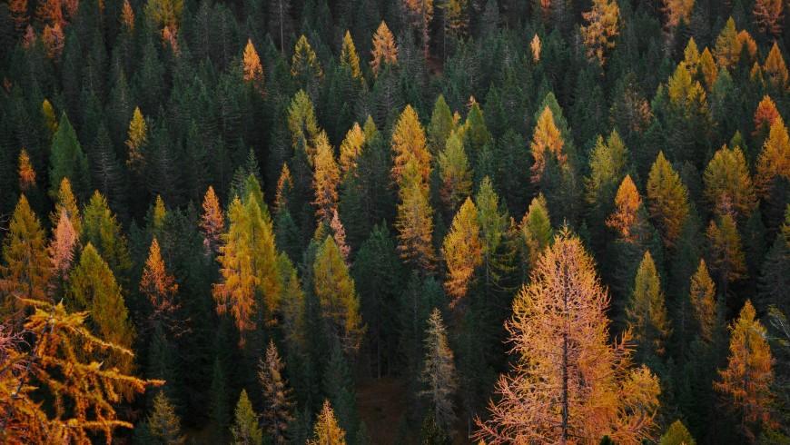 Boschi in autunno