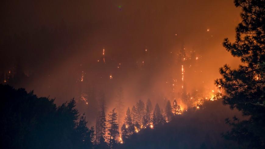 Incendi, siccità, distruzione foreste