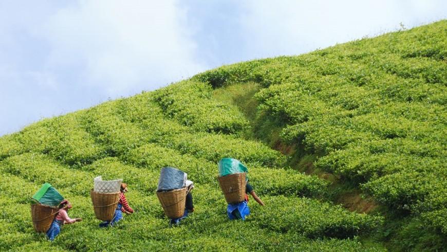 Notizie Green: Il Sikkim è il primo stato interamente biologico