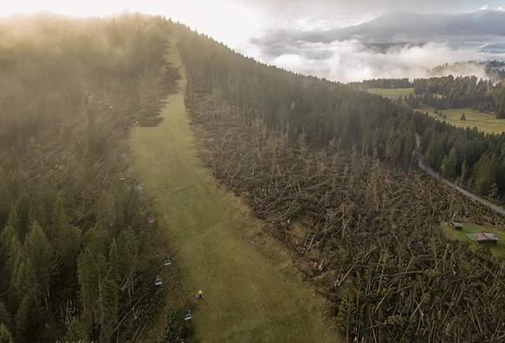 Strage di alberi sulle Dolomiti