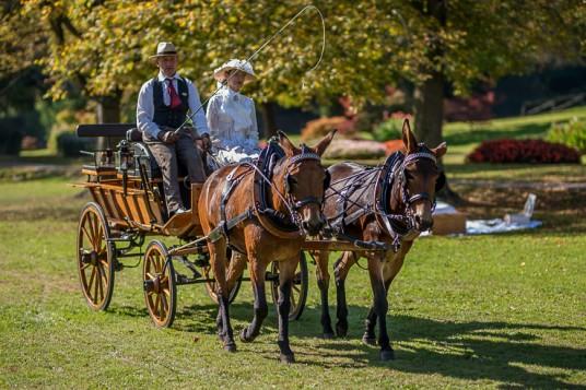 Sfilate di carrozze e balli dell'Ottocento nel Parco Sigurtà