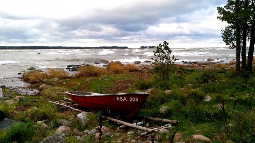 Un tratto selvaggio e naturale di costa dell'Estonia