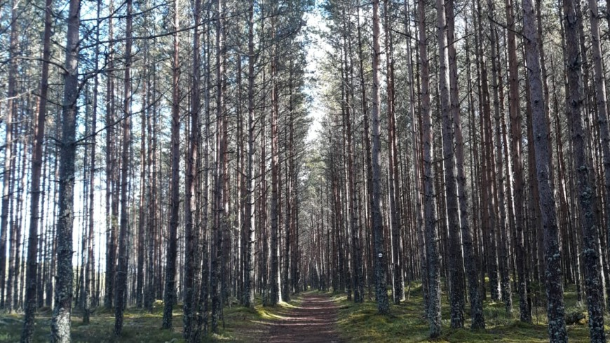 Estonia, boschi e foreste