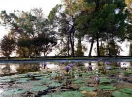 Alberi che si specchiano in un laghetto del Parco Sigurtà