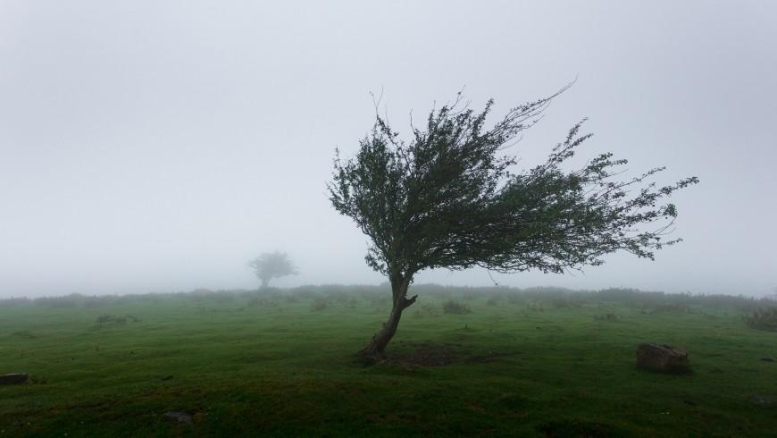 Strage di alberi, Furia della natura