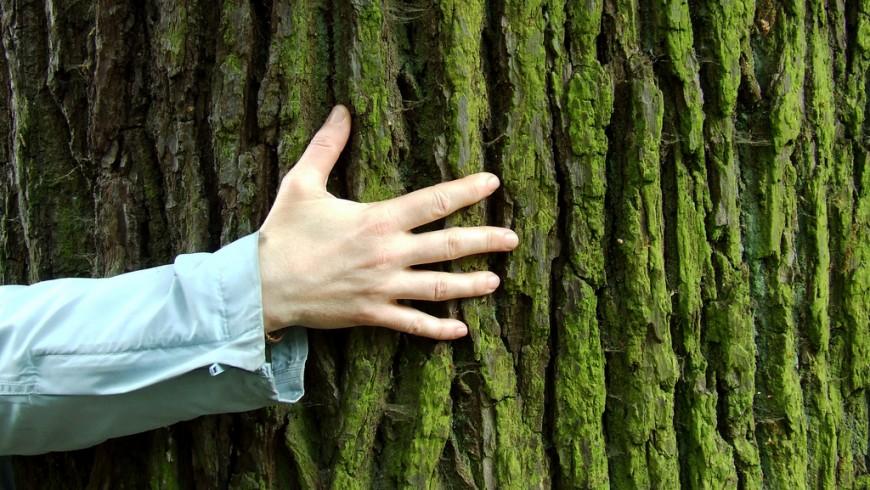 La grande quercia da abbracciare