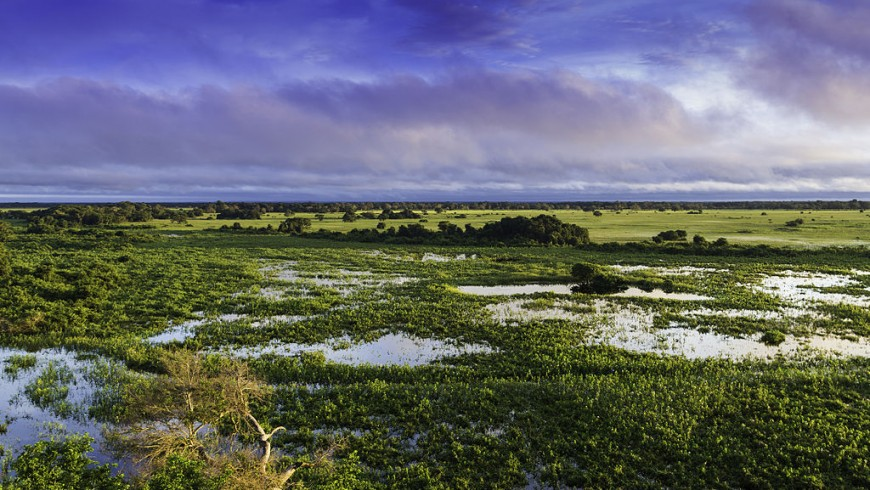 Il paesaggio del Pantanal, Brasile