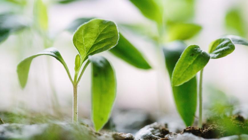 sostenibilità: piantine che crescono