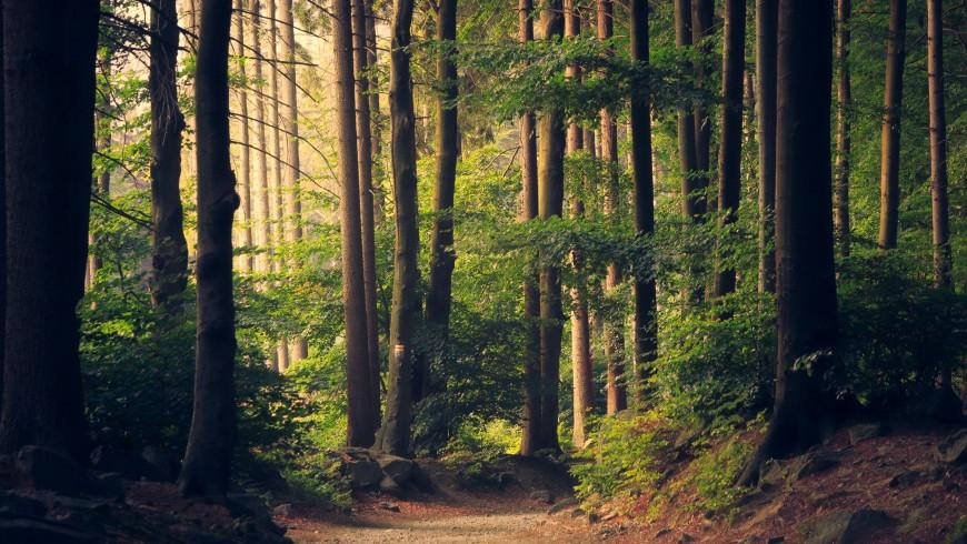 Regalare una notte nel bosco