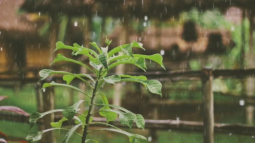 Raccolta dell'acqua piovana per innaffiare l'orto del tuo hotel green