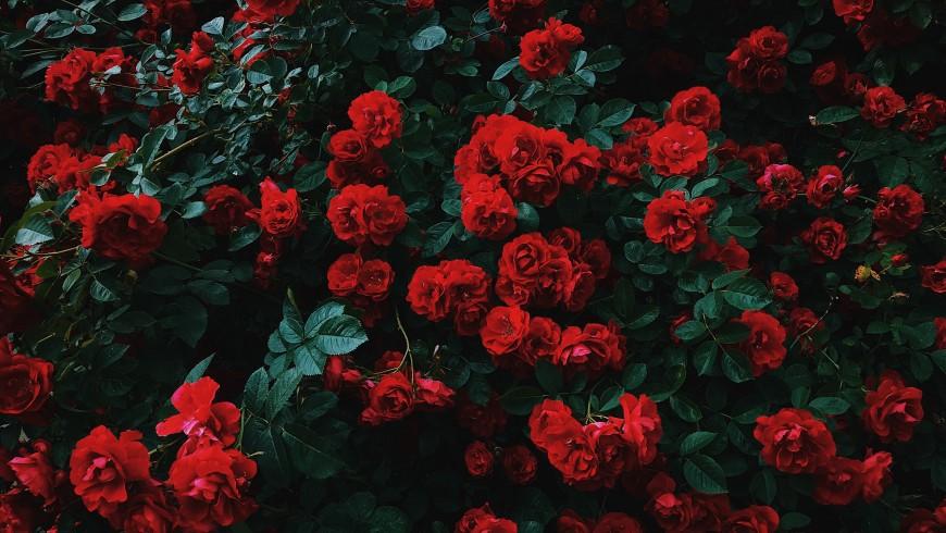 Regalare un weekend tra le rose