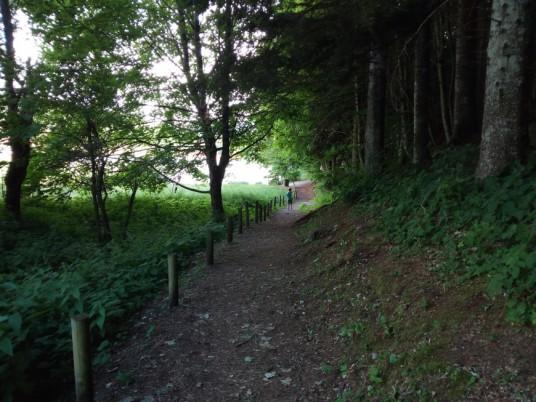 sentiero nel bosco verso il lago di Lavarone