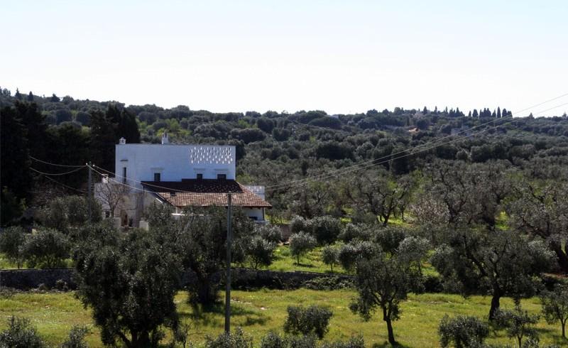 Agriturismo Masseria Bellolio: il tuo eco-matrimonio tra ulivi millenari