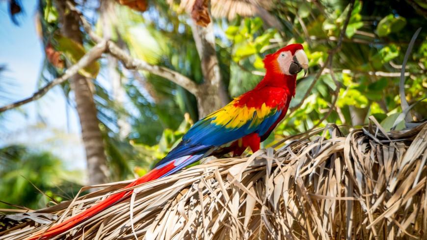 Costa Rica, con la sua eccezionale biodiversità, è una delle destinazioni per eco-viaggiatori del 2019