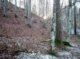 sentiero nel bosco sugli altipiani cimbri, nosellari, folgaria