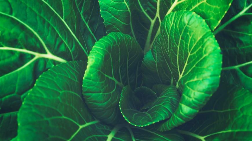 il lundi vert ha un impatto positivo sulla salute
