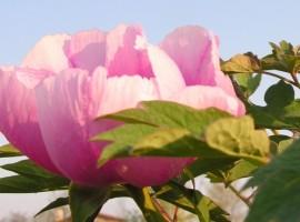 Fiore nel giardino di Casa Fiorindo