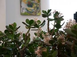 Casa filippo a Dro, fiori