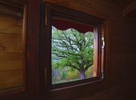 Quercia monumentale vista dalla finestra del bagno