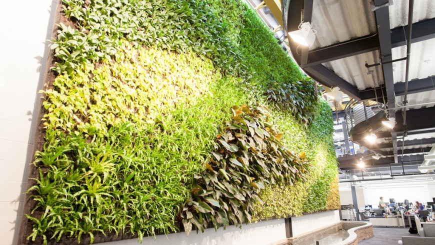 Interior living wall in office entire wall
