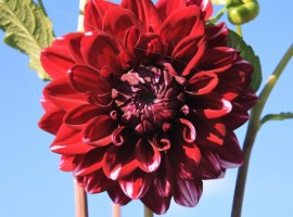 Un fiore a Casa Fiorindo